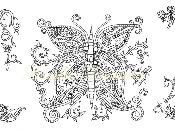 Zentangle butterfly colouring page with watermark
